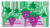 Traubenkernöl auf das Haar – ein paar Informationen